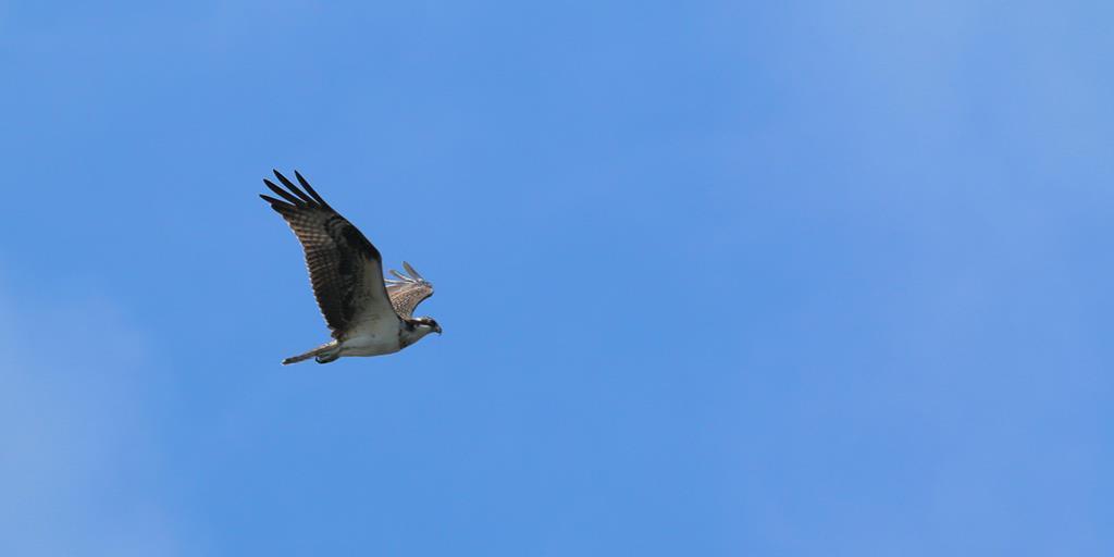 Fall Migration: Behold Beautiful Birds in Pennsylvania Skies