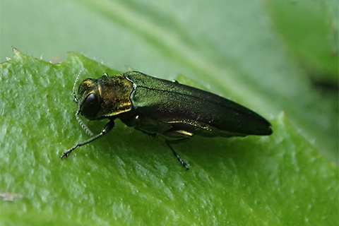 5_EAB_Blog_Photo5.jpg