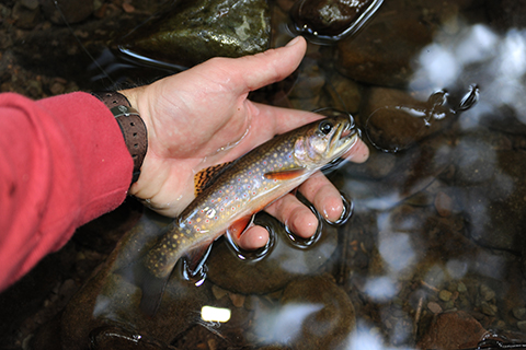Brook Trout Blog 3.jpg