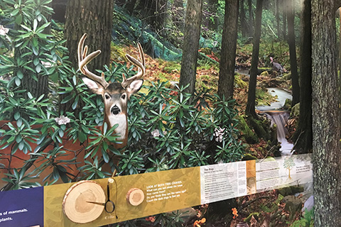 Buchanan State Forest Headquarters Interactive Educational Displays