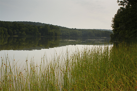 Hopewell_Lake_at_French_Creek_State_Park.jpg