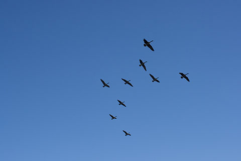 Birds above French Creek State Park