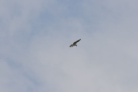 Bird above Moraine State Park