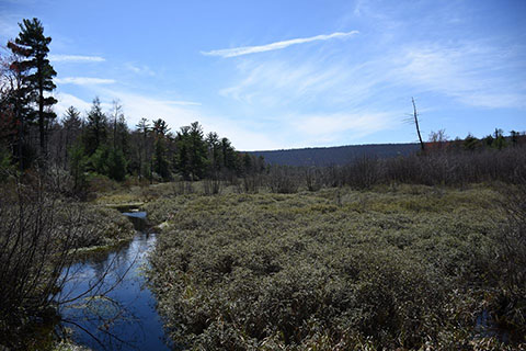 Bear Meadows Natural Area