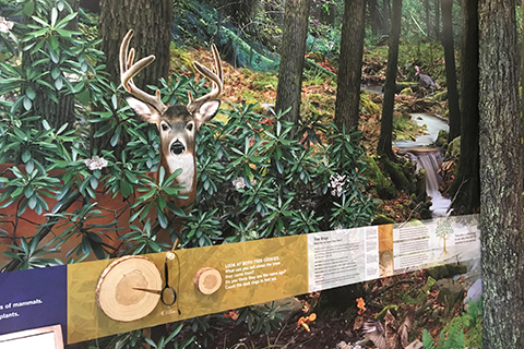 An interpretive display shows a deer in the forest at the Buchanan Forest District Resource Management Center.