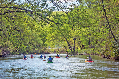 Multiple people paddle kayaks down a calm river under a canopy of trees